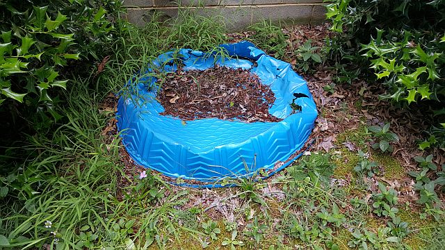 photo of good mosquito breeding habitat