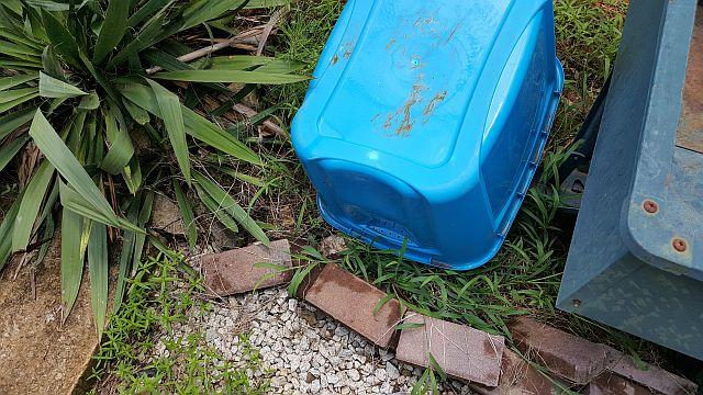 photo of good mosquito breeding habitat